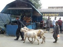Nathia Gali, Khyber Pakhtunkhwa, Pakistan (ben.scruton) Tags: pakistan bbq goats nathiagali