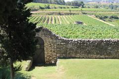 Jardí i vinyes Albet i Noya