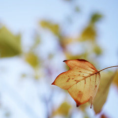 leaf/explore 4.10.2013/ (I.Dostl) Tags: autumn color square leaf bokeh
