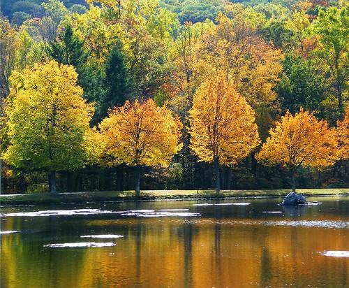 Orange Fall Reflections