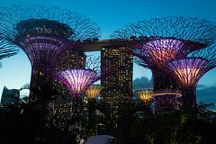 Árboles artificiales @Gardens by the Bay (agu²!) Tags: lugares singapur singapore árboles trees artificales artificial parque park luces lights edificio building rascacielos skyscraper atardecer sunset