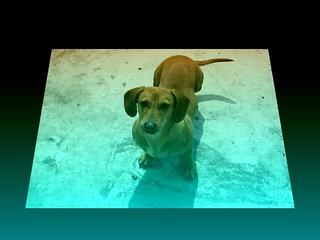 #CrazyCamera dog