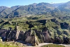 Lush Canyon (rovinglight) Tags: mountains green peru canyon valley lush colca andean puno lpverdant caumahacienda
