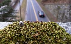 Snail (Decay at the Park, 2008) (david ross smith) Tags: road texture grass car contrast washingtondc moving automobile perspective snail overpass transportation comparison relative rockcreekpark greengrass highangle movingforward davidrosssmith