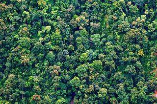 寻找中国最高的树