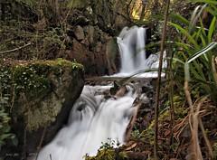 REGO FONDÓN-2 (LUIS FELICIANO) Tags: españa naturaleza rio natura olympus galicia 1001nights e5 chapela 1122mm 1001nightsmagiccity mygearandme regofondón2