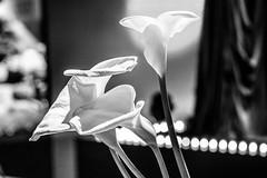 Philadelphia Flower Show (eyedocal) Tags: digitalcamerclub philadelphiaflowershow2014