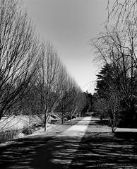 shadow.path (C.Kalk DigitaLPhotoS) Tags: weg path pfad baüme trees schatten shadow blackandwhite schwarzweis bw sw outdoor hamburgerfotofreaks