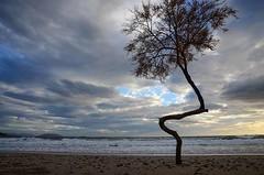 Shapy beach tree (kutruvis nick) Tags: greece greek hellas attiki lagonisi bluecoast beach sea water waves sand coast seascape sky clouds windy tree nik kutruvis nikon d5100
