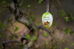 Happy Easter (JayPiDee) Tags: bigma blatt busch deko easter natur osterei ostern pflanzen sigmadg50500mm4563apohsm decoration easteregg leave piante plants