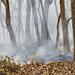 Control fire in the Kaziranga National Park, Assam, India