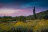 20170320-DSC_4937 (lilnjn) Tags: arizona landscape southwestunitedstates travel unitedstates sky sunrise whitetank