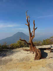 Growing on the Edge (Eye of Brice Retailleau) Tags: angle blue sky ciel colourful colours composition earth landscape montagne mountains nature outdoor paysage perspective scenery scenic travel trees trekking view vista extérieur volcano indonesia java kawahijen