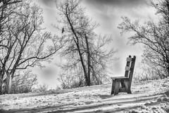 A Bench and a Vulture (Carol Matthai Photography) Tags: blackandwhite field snow bench vulture nature wildlife irvinenaturecenter irvine winterscene winter hill hillside empty