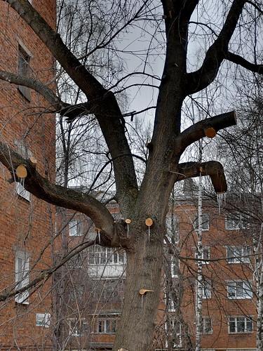 tree sosulki srezy v2 DSCF1457
