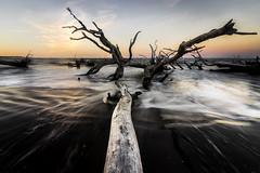 DSC05969 (dgrano20) Tags: big talbot island state park sonya7ii tokina1116mm beach
