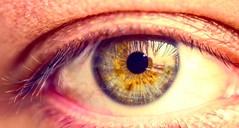 Hazel eyes . . . . Just a flower infested by bugs . . . . #eye #green # #instagram #instagood #instagramhub #flower #photo #photograph #photography #photooftheday #greeneyes #macro #nikon #ig #igaddict #vsco #vscocam #vscogood #insta #handmade #eyes #haze (Zlatan Papayalopulus) Tags: instagramapp square squareformat iphoneography uploaded:by=instagram eyes macro greeneyes human iris amazing light hazeleyes