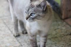 IMG_1366_1 (Pablo Alvarez Corredera) Tags: mundo rural mascota gato gata gatita dormi