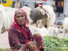 Gardienne de vaches ..Bundi..India (geolis06) Tags: geoli06 asia asie inde india rajasthan bundi streetlife rue route road rajasthanipeople rajasthanipeoples rajasthanipeoplebundi olympus olympusomdem5