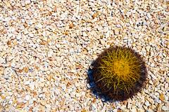 JARDINES DE MEXICO (fco_galan34) Tags: jardines mexico naturaleza natural morelos paisajismo ecosistemas flores colores plantas arboles cactaceas cactus