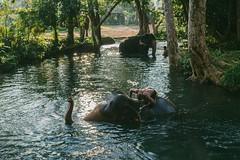 A bathroom for elephants (przemyslawkrzyszczuk) Tags: tajlandia thailand przygoda fun adventure trip journey jungle dzungla life lifestyle 6d canon green zielony thailandjungle sky blue asia azja nature natura forest beach plaza piasek sand elephant 50mm bathroom lazienka slon slonie