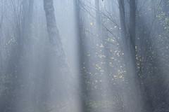Firestarter (Russ Barnes Photography) Tags: