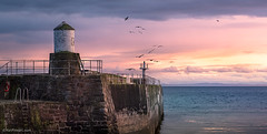 Pittenweem Lighthouse (YuriFineart) Tags: landscape sunrise birds sunset light clouds coast harbour lighthouse ocean pier pink panorama scotland purple seagulls panoramic colorful illuminated dock harbor flying fineart coastal unitedkingdom scottish yuri pittenweem yurifineart