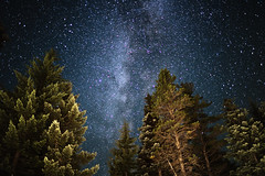 Doug Firs and Milky Way ([ raymond ]) Tags: astrophotography forest milkyway night oregon stars trees trilliumlake mg2128