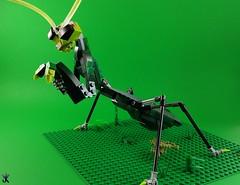 Mantis (Norweasel) Tags: lego bug mantis praying insect