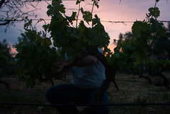 Vespera (Mozarell4) Tags: sunset vineyards easter ~