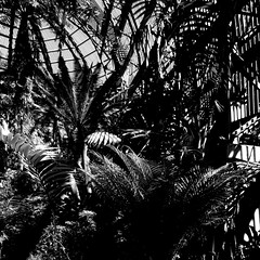 la jungle noir (Dom Guillochon) Tags: noiretblanc nature plants botanical building earth time life reality dream existence wood lattice architecture geometry humans sunlight photosynthesis roam wandering multiverse jungle