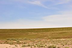 Gravel Pit Trail (Great Salt Lake Images) Tags: spring morning bison antelopeisland greatsaltlake utah