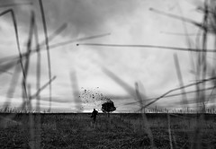 190/365 (lukerenoe) Tags: conceptual blackandwhite photoshop composite colorado adventure art white black 365 edit lukerenoe field tree