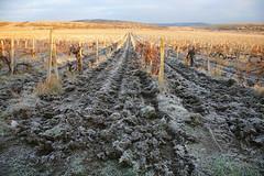 осенний мотив (Andrey Gusachenko) Tags: виноградники осень пейзаж vineyards autumn landscape