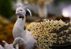 (Light Echoes) Tags: sony a6000 2017 slrmagic 50mm f11 winter march philadelphia philadelphiaflowershow philadelphiainternationalflowershow flower sculpture peacock white blanc