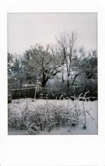 (|Digital|Denial|) Tags: instax mini instantphotography analog film colour snow spring snowcovered backyard
