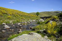 Gredos (C.Frayle) Tags: montaña nature naturaleza nikon paisaje paysage españa spain amarillo verde green