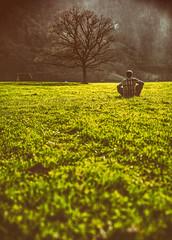 (raimundl79) Tags: wow wald tree baum bestpicture beautifullandscapes tamron2470mm travel image photographie panorama portrait austria österreich fotographie foto vorarlberg nikon nikond800 nüziders flickrr flickrexploreme flickrsexploreme explore exploreme entdecken lightroom landschaft landscape ländle