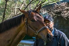 Keeneland Spring Meet 2017 (sallydillo1) Tags: keeneland keenelandspringmeet lexington lexingtonky lexky sharethelex bluegrass bluegrassstate horses horseracing thoroughbreds kentucky