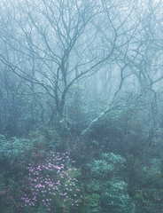 (Appalachian Hiker) Tags: spring rain woods woodland fog mist morning flowers appalachia