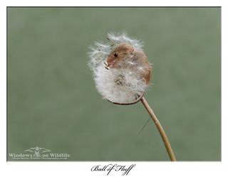 Little Ball of Fluff !