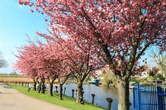 IMG_4939 (Kanok) Tags: nld netherlands tripaboard tulipcruise zuidholland geo:lat=5188839333 geo:lon=463660167 geotagged kinderdijk