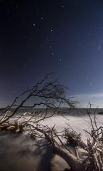 DSC05996 (dgrano20) Tags: big talbot island state park sonya7ii tokina1116mm beach