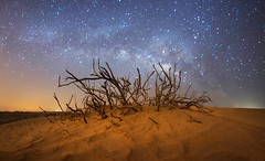 Dry (samy olabi) Tags: ifttt 500px sky travel blue night tree abstract stars sand long exposure desert astronomy dry milky way astrophotography bushes milkyway photography nightscape empty quarter dubai uae abu dhabi