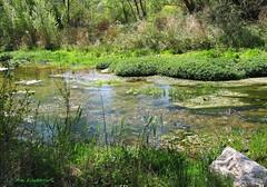 El rio Cidacos (kirru11) Tags: ríocidacos quel lariojabaja españa agua hiervas campo piedras árboles kirru11 anaechebarria canonpowershot