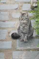 IMG_6089 (Pablo Alvarez Corredera) Tags: gato gata vega barros asturias mascota mascotas compañia