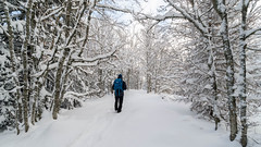 Walk in silence (Introvert / Dreamer / Mind wonderer) Tags: walk walking hike hiking snow forest wood winter alone tree loneliness nature silence landscape path paysage neige foret bois arbre marche randonnée seul hiver solitude vercors isère france
