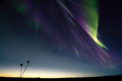 Aurora Strike (redfurwolf) Tags: southpole antarctica aurora auroraaustralis sky night nightsky flags stars simplicity simplistic outdoor nature horizon light green purple blue redfurwolf sonyalpha a99ii sal1635f28za