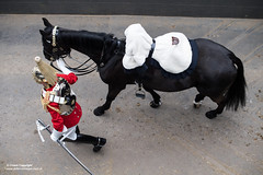 QUEENS CAVALRY READY FOR SUMMER OF CEREMONIAL (Defence Images) Tags: ceremonial occasion horse animal soldiers nonidentifiable personnel helmet headwear plumedhelmet jackboots breastplate silvercuirasses army regiments thehouseholdcavalry thehouseholdcavalrymountedregiment hcmrd location london equipment clothing hydeparkbarracks saddle defence free defense uk british military londondistrict unitedkingdom gbr