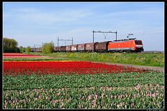 DBC189068+61265_Hil_30042017 (Dennis Koster) Tags: dbc db br189 189068 61265 staaltrein goederentrein trein bollen hillegom